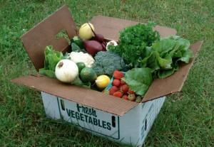 A Driftless Organics CSA Box in July
