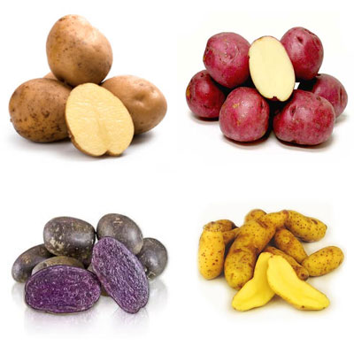 potato4varieties